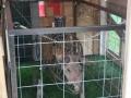 4 reinier kranendonk