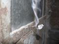 moxibustion3